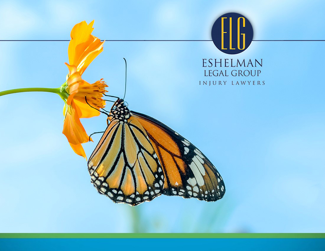 Monarch Butterfly | Personal Injury Lawyers Ohio
